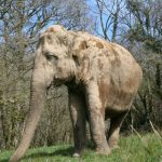 A very water efficient elephant… - Sally Hall, UK