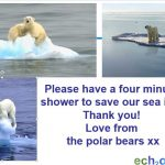 Is your shower killing the polar bears?